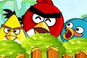 Angry Birds Bomber oiseaux